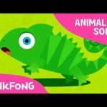 Hide 'n Seek | Animal Songs | PINKFONG Songs for Children