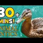 Animal Antics – In the Pond with the Ducks | Spring Mornings | 30+ mins on the Farm