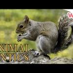 Animal Antics – Animal Friends   Full Episodes   Wizz   TV Shows for Kids