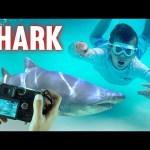 Wild Sharks CAUGHT ON CAMERA in Florida Keys!!  || Mommy Monday