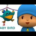 Pocoyo- Baby Bird's Adventures 🐥50 minutes   Cartoons for Kids