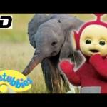 ★Teletubbies English Episodes★ Baby Elephant ★ Full Episode – HD (S12E19)