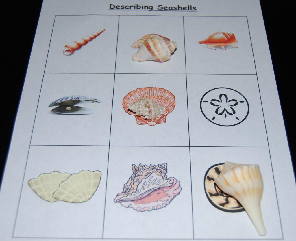 Ocean Theme Worksheets For Preschool