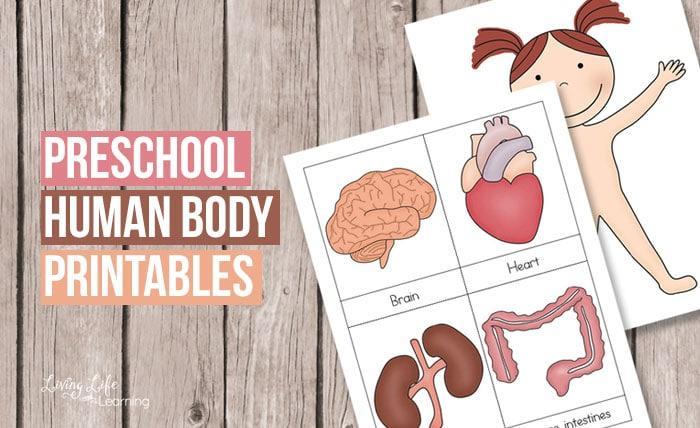 Preschool Worksheets My Body 1