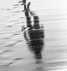 Walking reflection