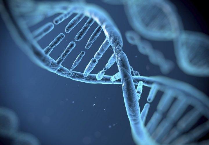 Resultado de imagem para Mutações genéticas