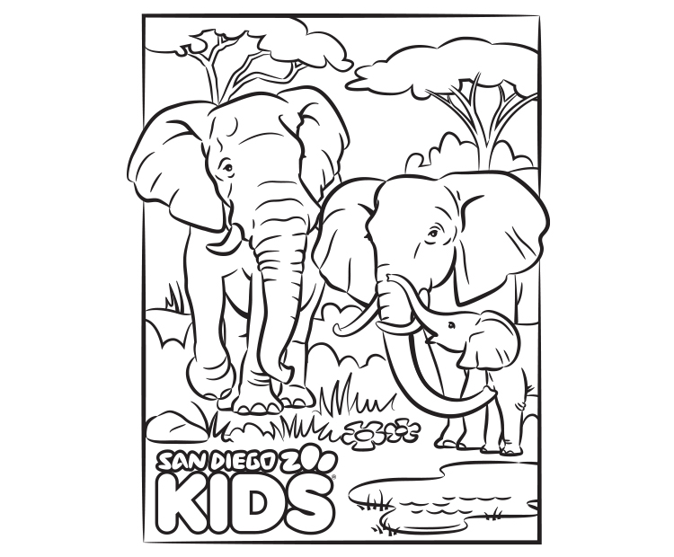 Coloring Page Elephant Family San Diego Zoo Kids