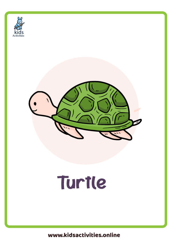 turtle flashcard