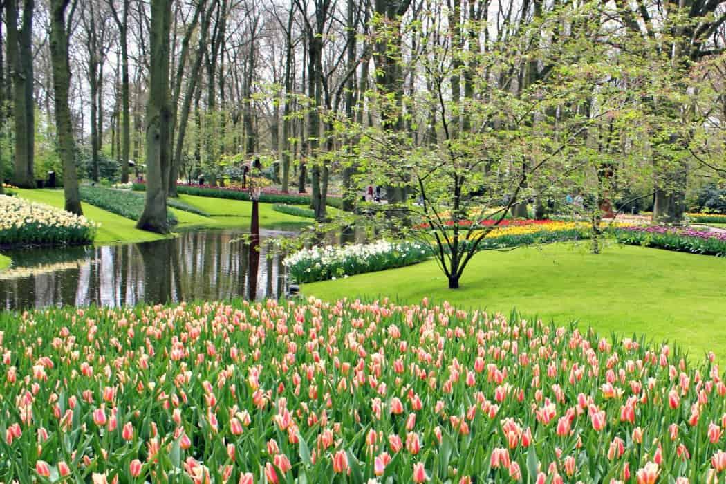 Holandia z dzieckiem - Ogrody w Keukenhof