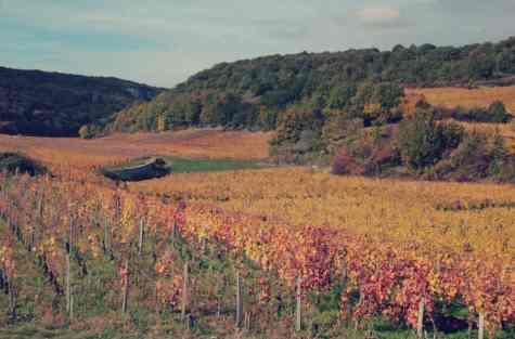 Jesien - Burgundia - Francja