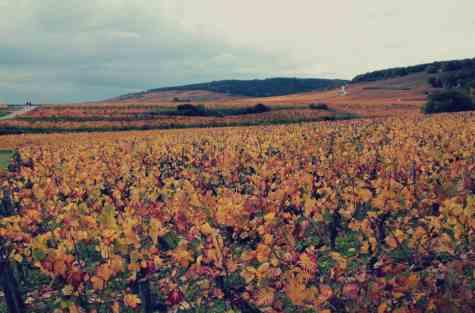 Jesienna Burgundia