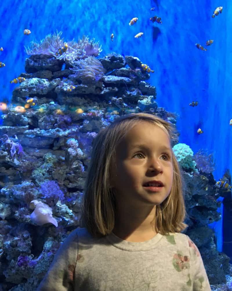 Barcelona dla dzieci - Aquarium