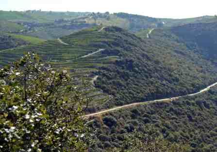 winnice w Dolinie DOuro