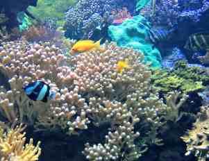 Oceanarium w Genui