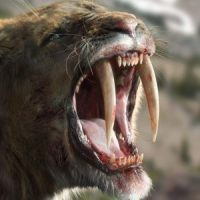 Saber Tooth Tiger Facts for Kids - Saber Tooth Tiger Facts & Information