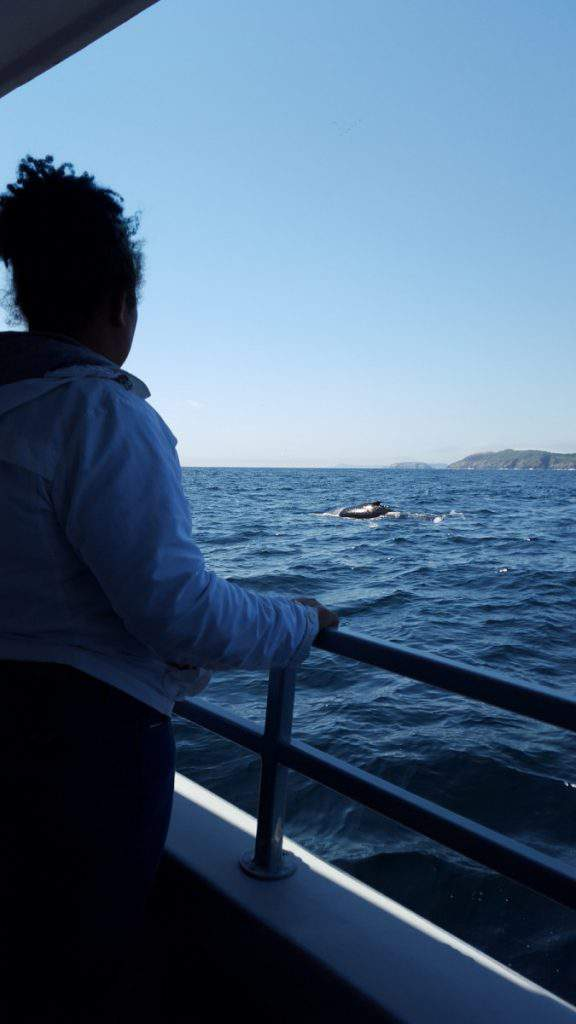 Whale Watching St. Johns-Kids Are A Trip