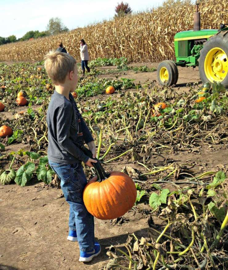 Visit to a Pumpkin Patch-Kids Are A Trip