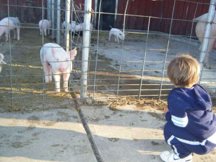 Family Friendly Things to Do in Fairfax County Virginia Farm-Kids Are A Trip