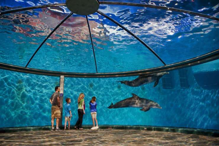 Family Friendly Things to Do Indianapolis Zoo - Kids Are A Trip