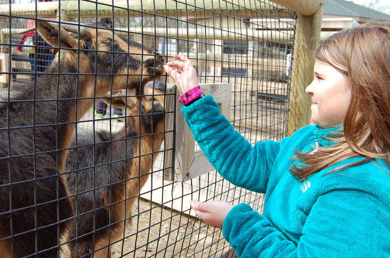 family friendly things to do in utica-zoo-kids are a trip