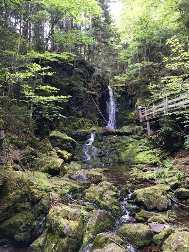 National Parks in Canada Fundy National Park-Kids Are A Trip