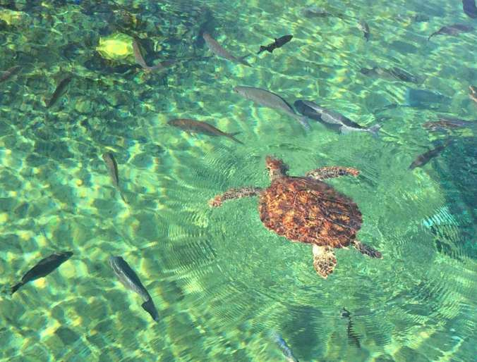 Top 5 Family Friendly Things to Do in George Town, Grand Cayman