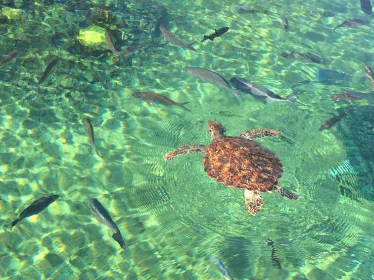 Family Friendly Things to Do in George Town Grand Cayman - Cayman Turtle Centre - Kids Are A Trip