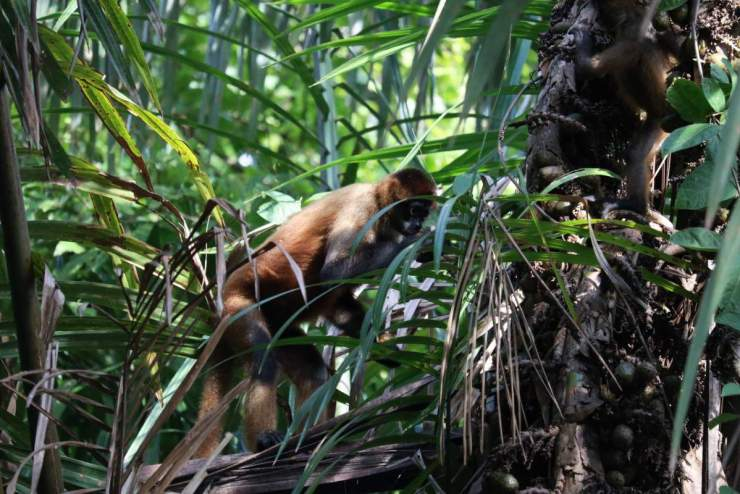 Adventures by Disney Costa Rica Vacation Monkeys-Kids Are A Trip