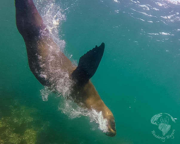 Top 5 Family Friendly Things to Do in Puerto Madryn, Argentina
