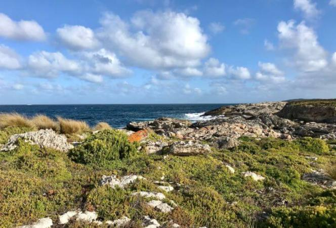 If you long to see the rugged side of South Australia and experience impromptu animal encounters, Kangaroo Island awaits.. Here's a guide on how to visit and the best things to do on Kangaroo Island. - Kids Are A Trip