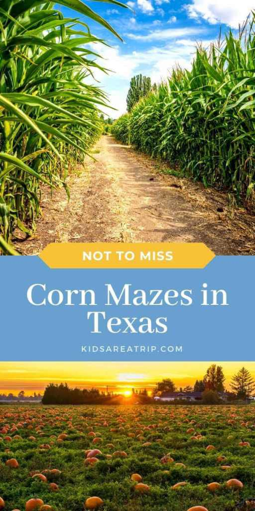 Not to Miss Corn Mazes in Texas-Kids Are A Trip