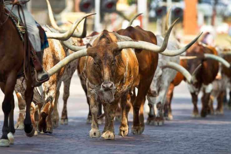 Fort Worth Texas Stockyards-Kids Are A Trip