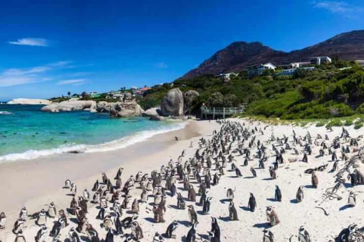 Cape Town Boulders Beach-Kids Are A Trip
