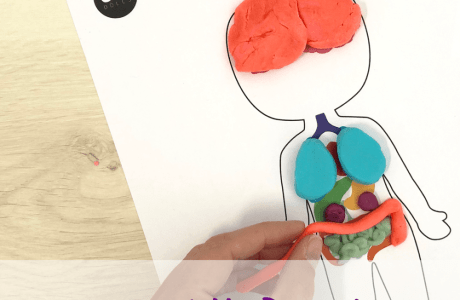 Free Human Body Playdough Printables