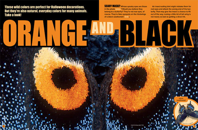 Orange and Black Ranger Rick October 2017 1