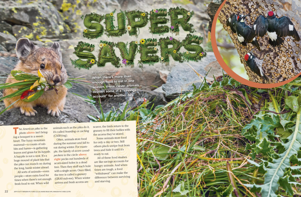 Super Savers Ranger Rick November 2017 1
