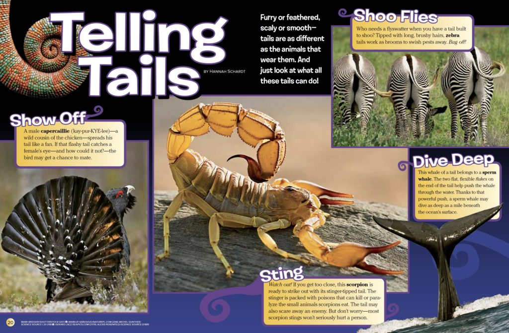 Telling Tails Ranger Rick March 2017 1