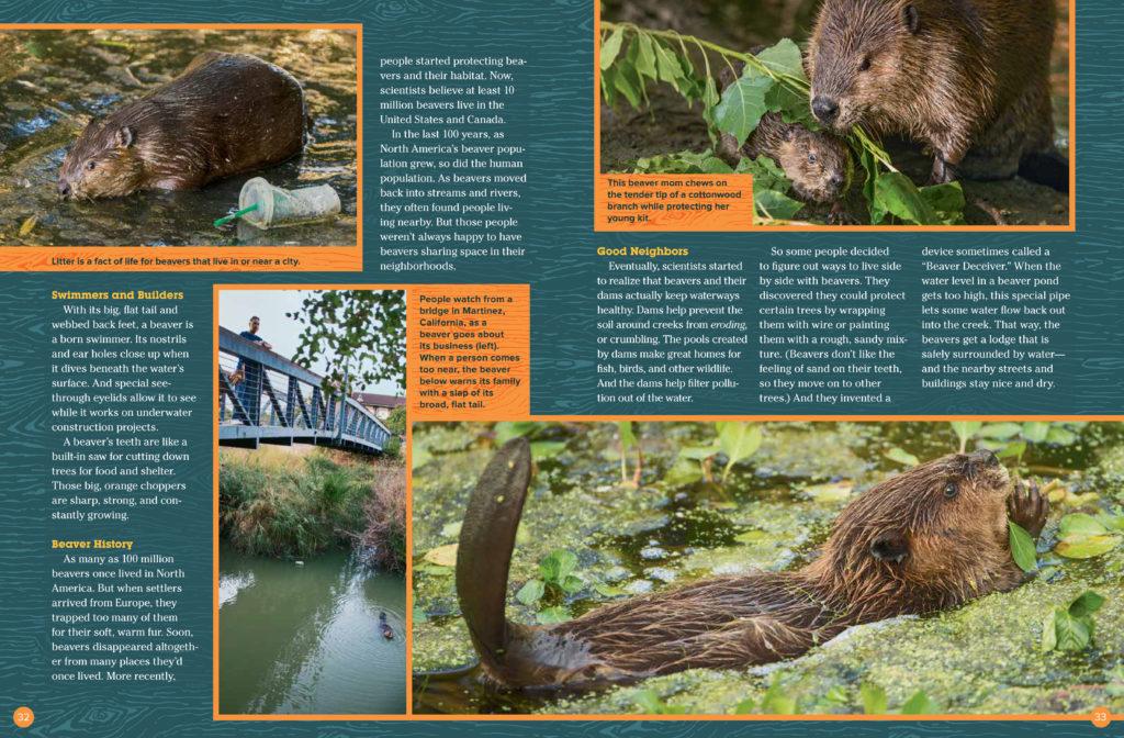 Beavers - May 2018 Ranger Rick 2