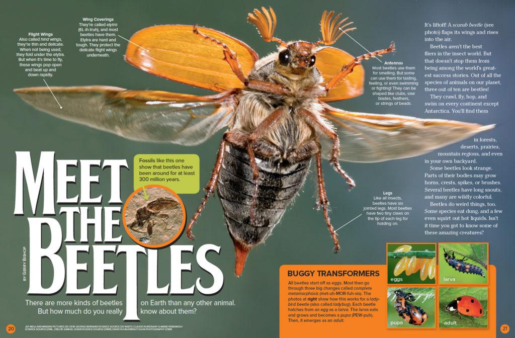 Ranger Rick Beetles September 2016 1