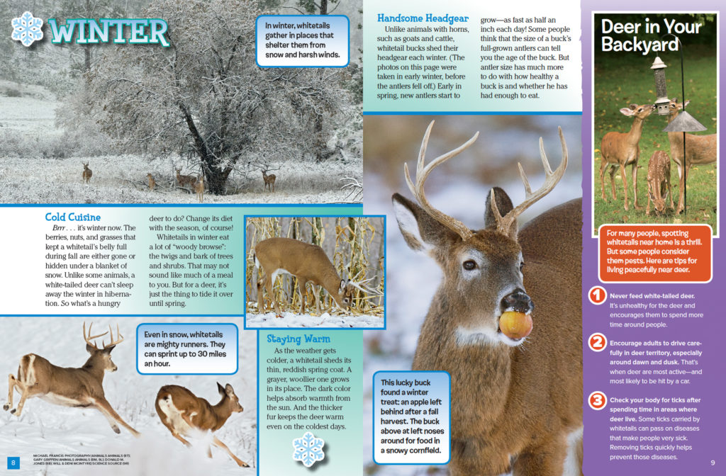 Ranger Rick Deer November 2016 2