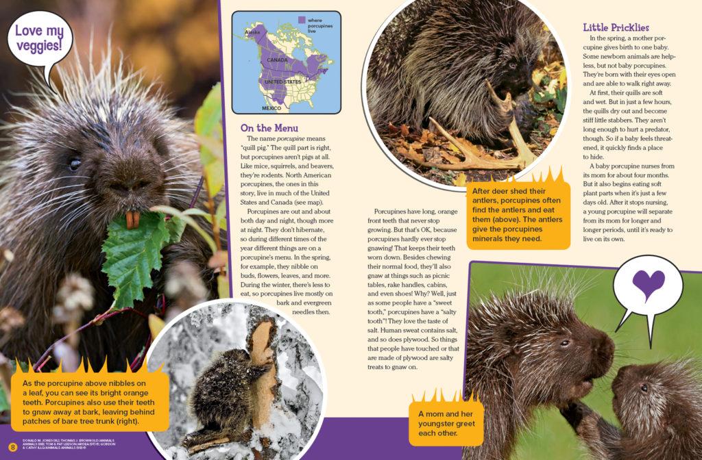 Ranger Rick Prickly Porcupines June July 2016 2