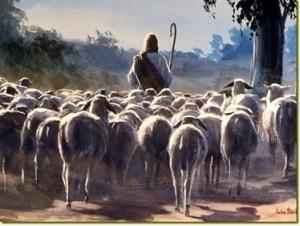 sheep-following