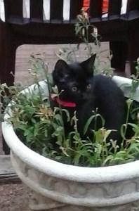 Twix in Flower Pot
