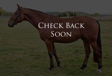 horse-for-sale-coming-soon