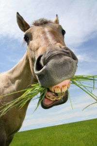 horse-chewing-grass