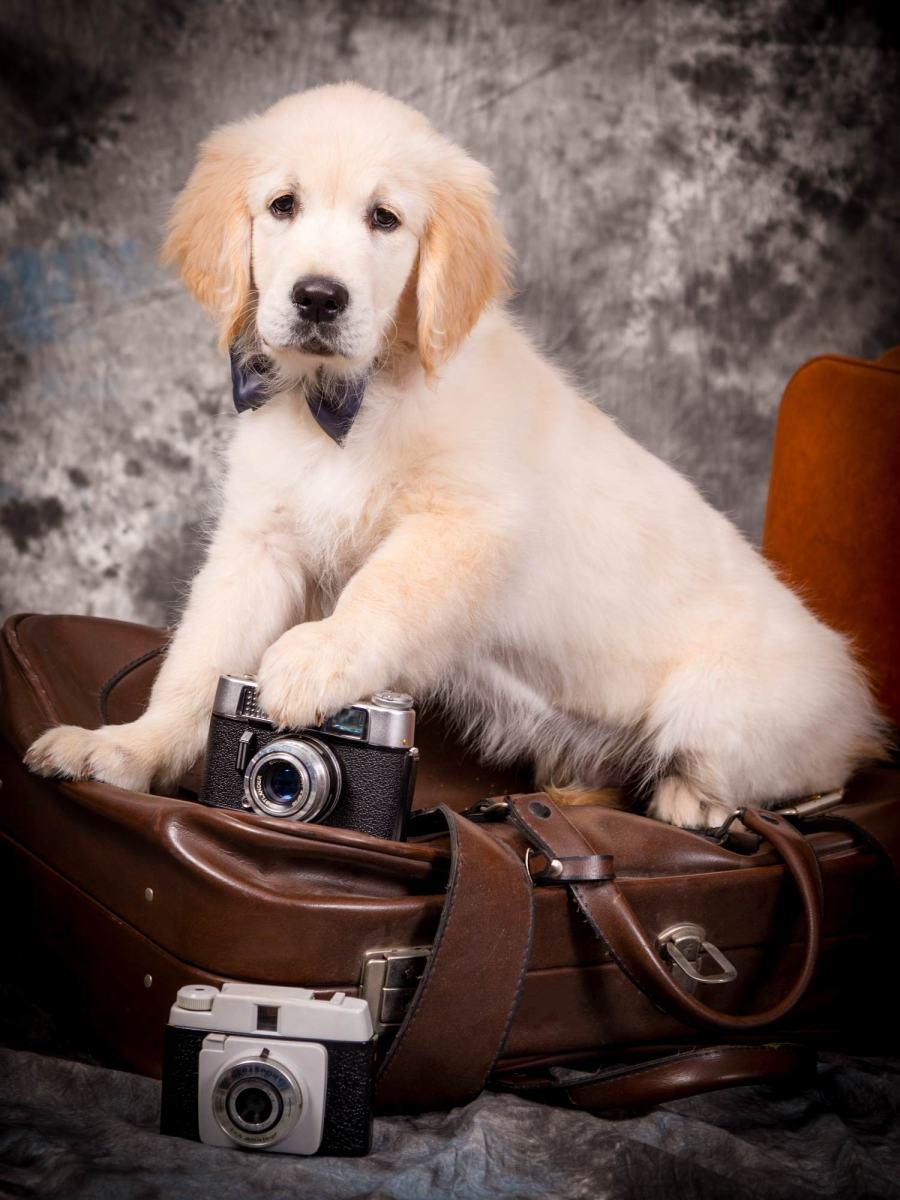 kidsfoto.es Mini sesión de estudio con mascotas , fotografía de animales con sus dueños en Zaragoza