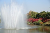 Seoul Olympic Park Autumn Foliage