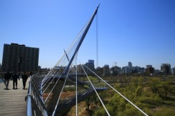 Yeouido Ecological Park and Saetgang Bridge