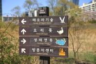 Ecology in Yeouido Saetgang