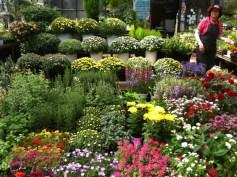 Yangjae flower market